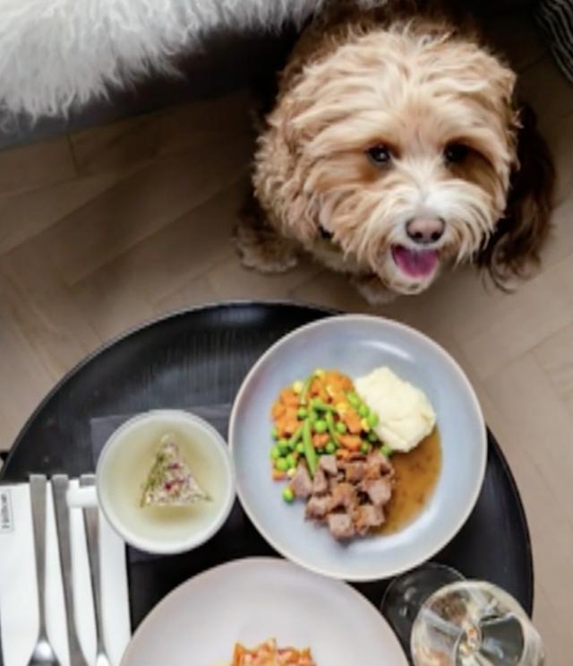Hilton dog meals