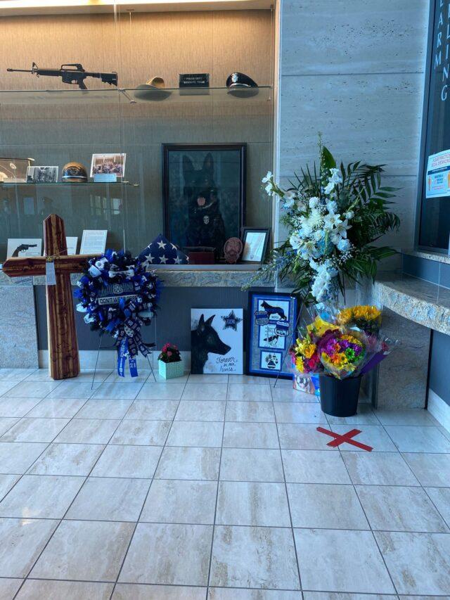 In memory of Kozmo