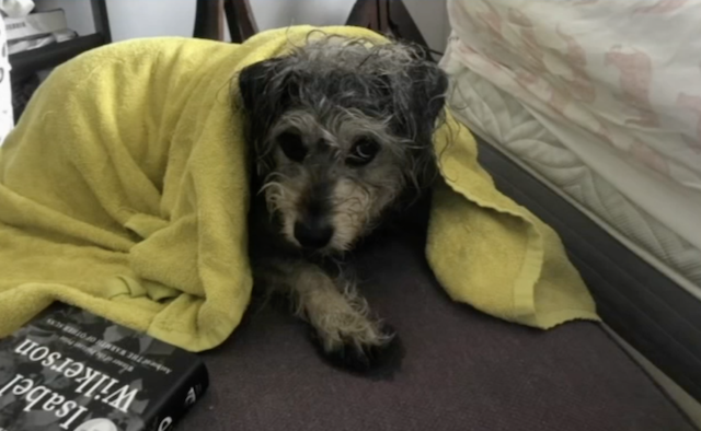 Lost dog found on subway