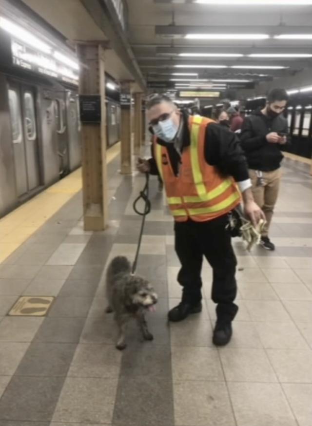 MTA saves lost NYC dog