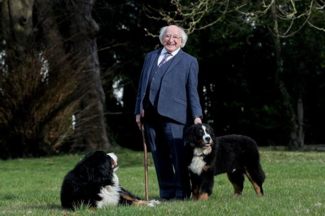 President Higgins and his Bernese Mountain Dogs