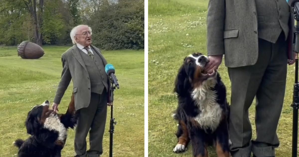President of Ireland's dog