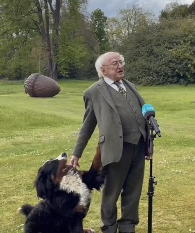 President of Ireland's Dog Steals Show