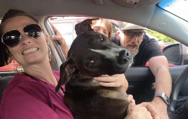 Stolen Pit Bull returns home