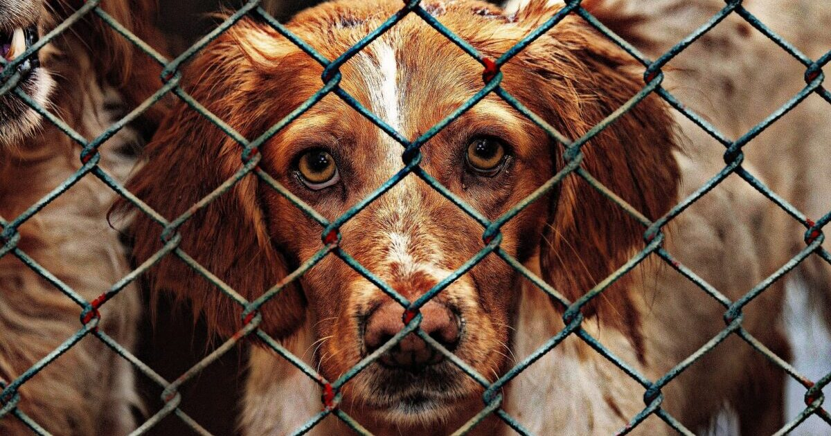 animal-shelter-dog