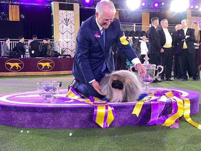 2021 Westminster Dog Show winner