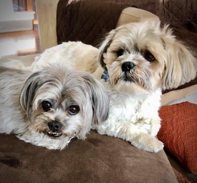 Cheryl's Dogs