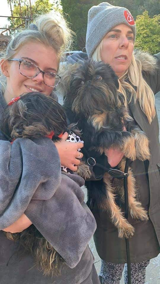 Lost Brussels Griffon Home