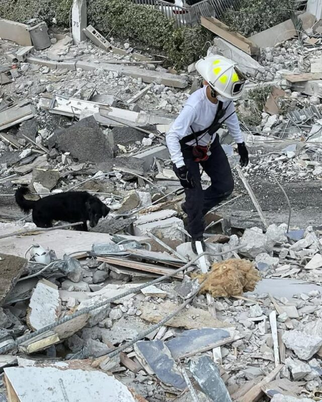 Dog and firefighter search rubble