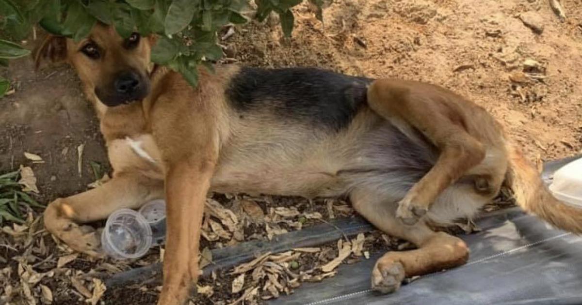 Rescue dog with broken legs