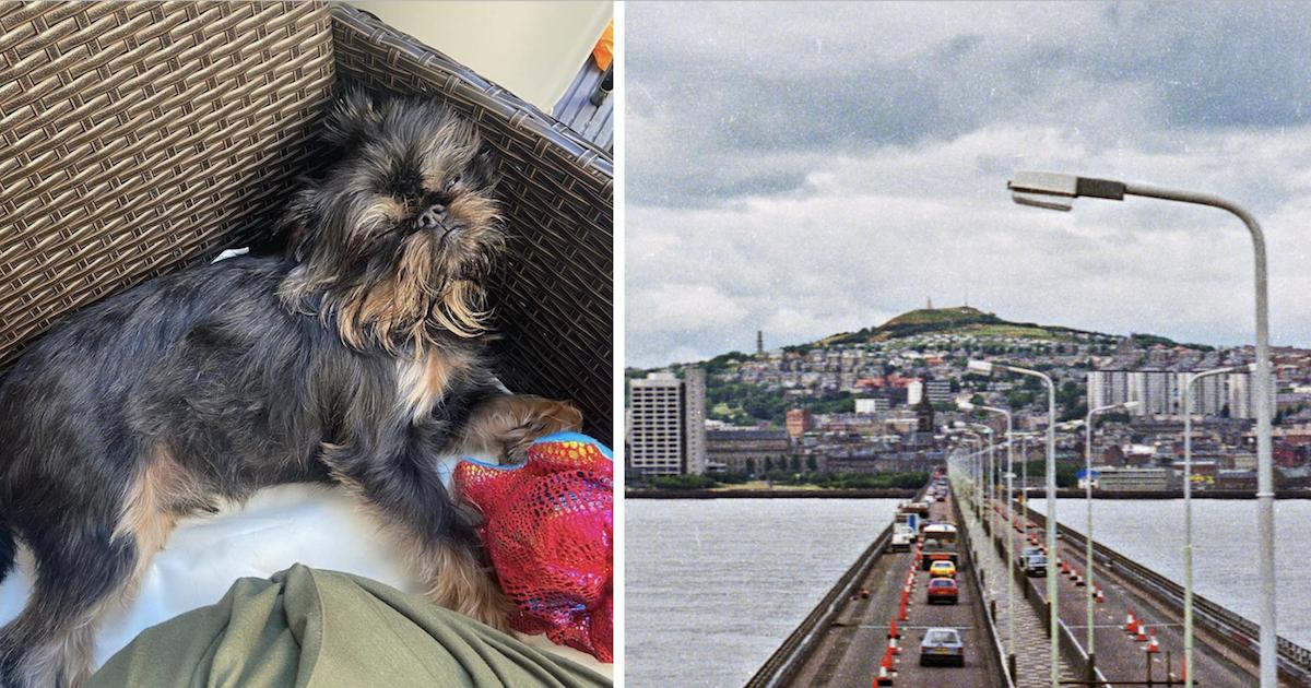Dog lost on bridge