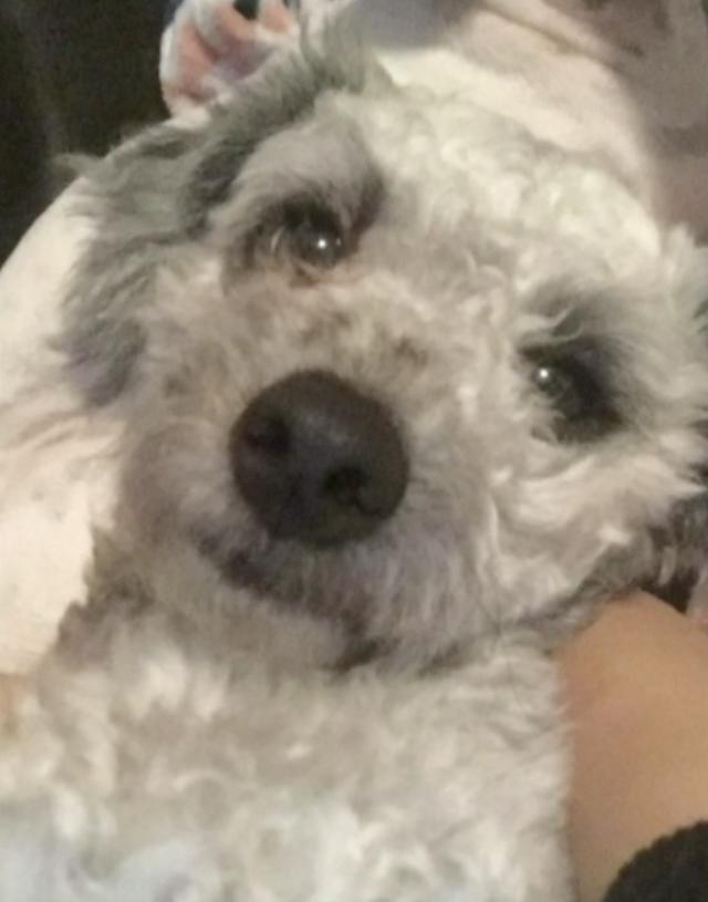 Dog microchip incident