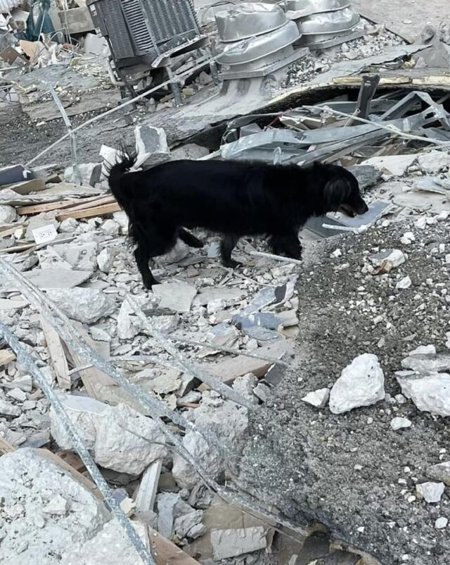 Dog sniffing rubble for life