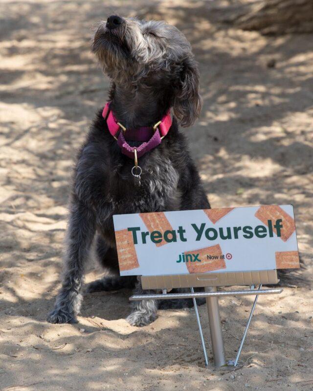 Dog with tiny billboard