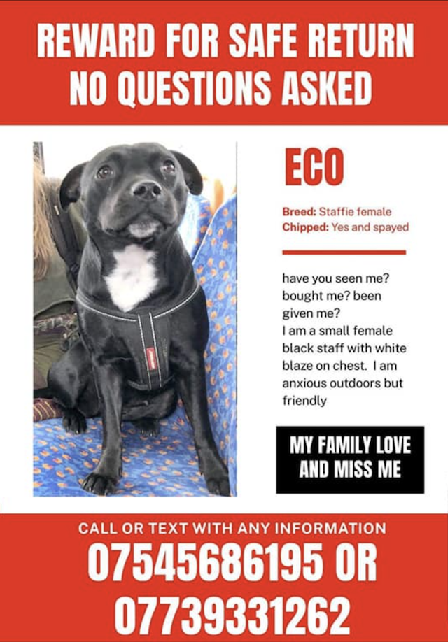 Eco missing poster