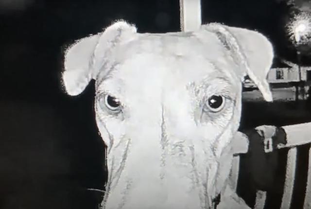 Lost dog ringing doorbell