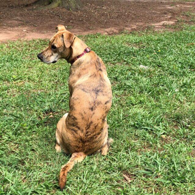 Lost dog in yard