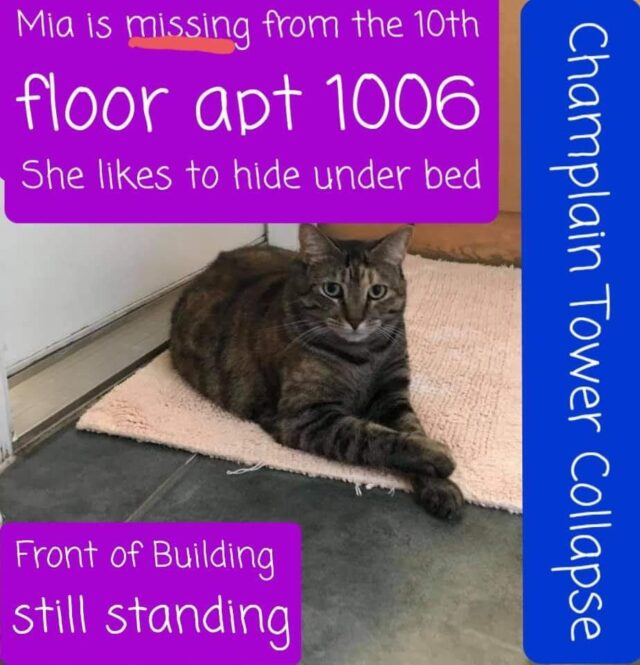 Missing cat tower collapse