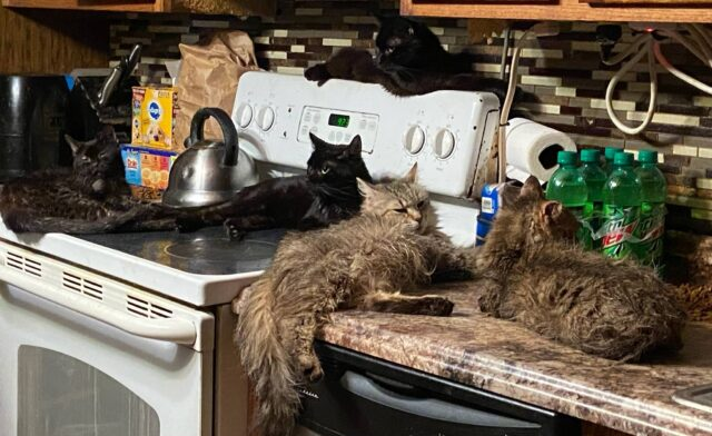 Neglected cats rescued