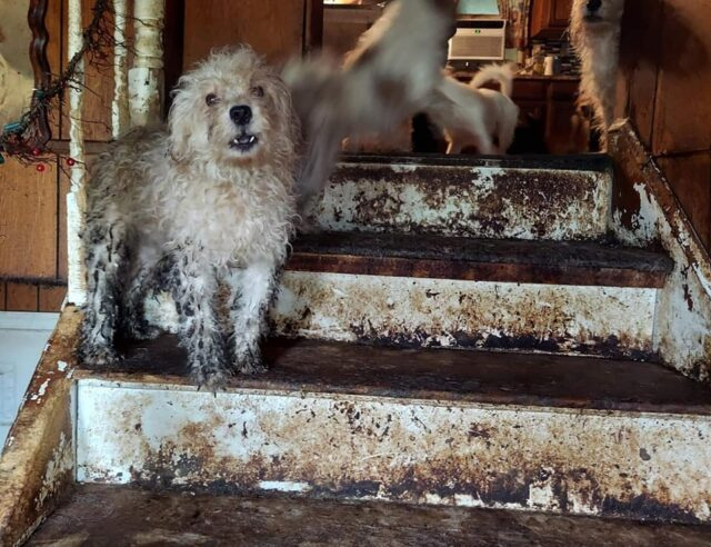 Neglected dogs rescued