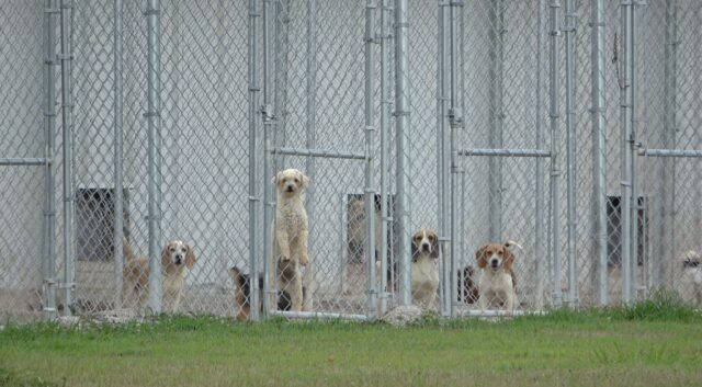 Neglected puppy mill dogs