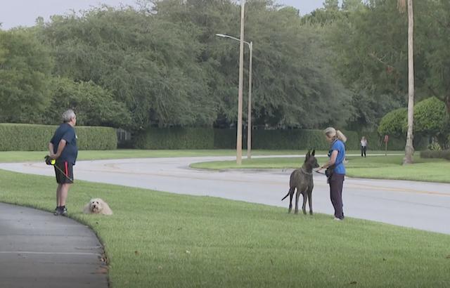 Neighbors walking dogs