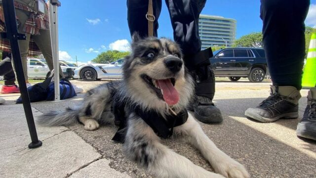 Oreo Search and Rescue Dog