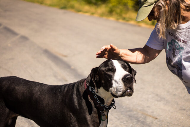 Woman petting large dog