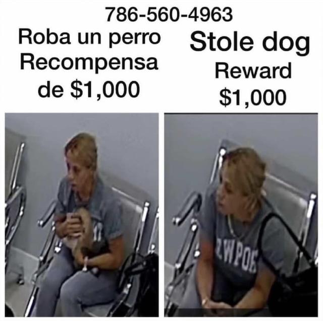 Puppy thief suspect