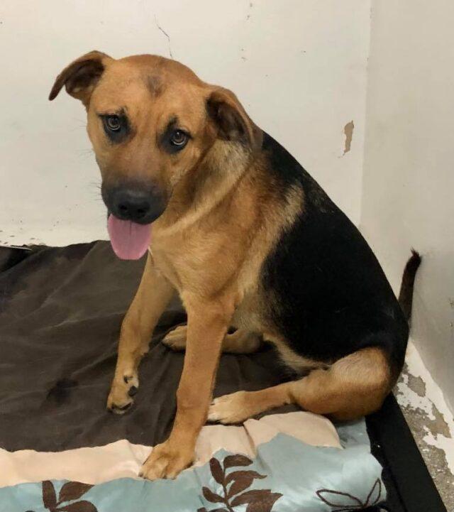 Sadie dog with broken legs