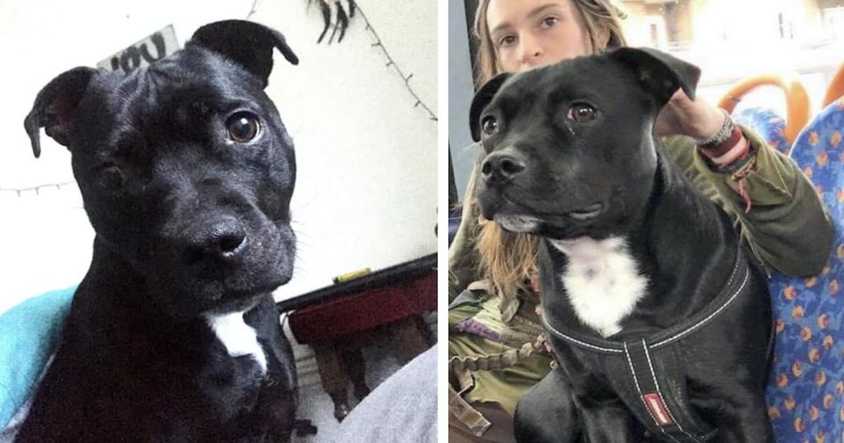 Stolen dog found by psychic