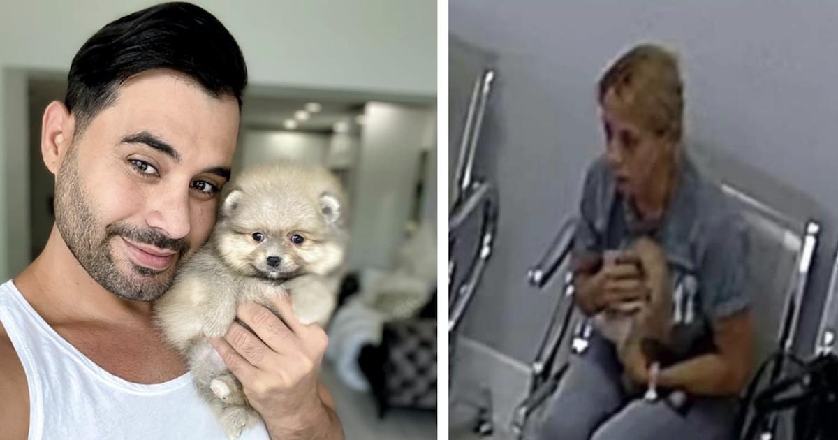 Stolen pomeranian puppy