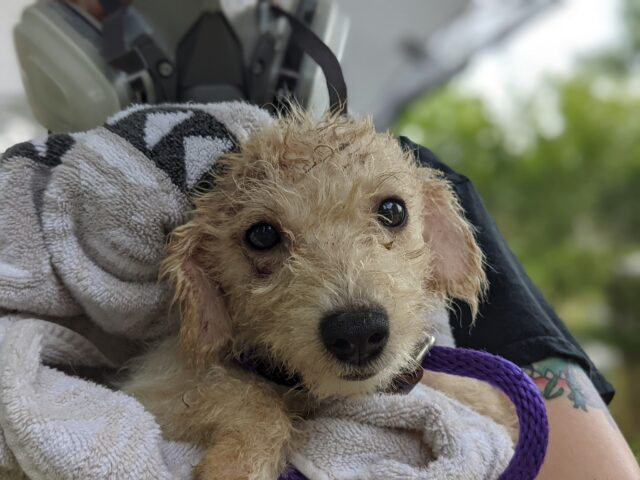 Sweet dog saved from neglect