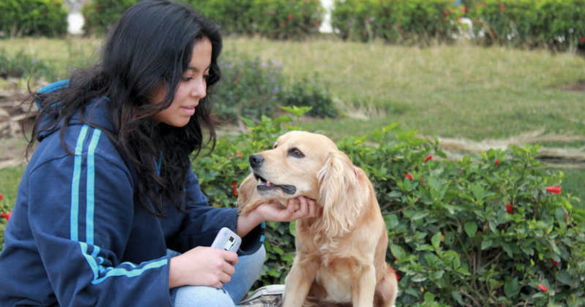 Therapy dog benefits