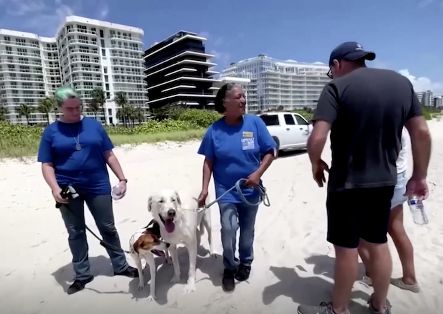 Therapy dogs Miami beach