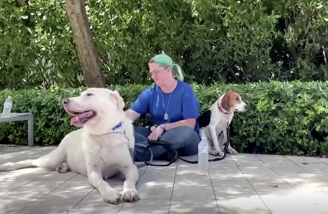 Volunteer petting therapy dogs