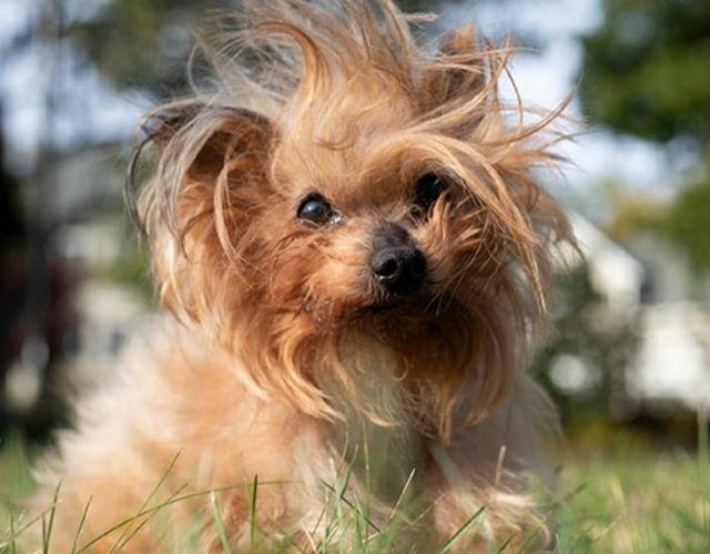 grumpy dog in morning