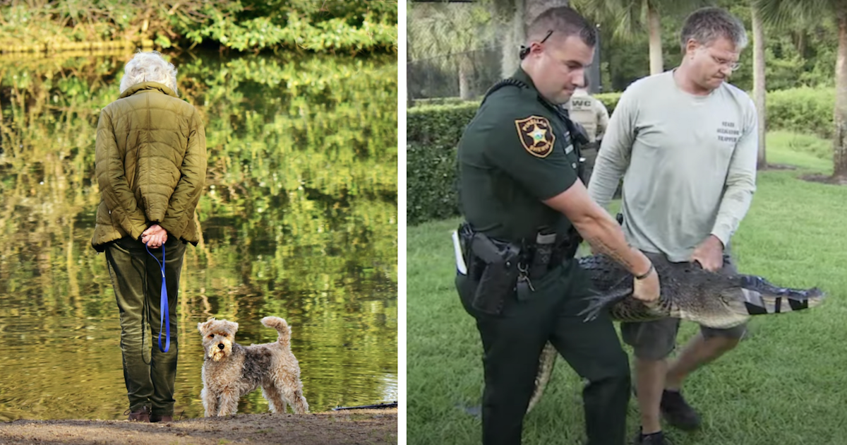 Woman saves dog from gator