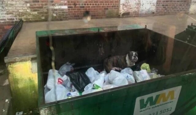 Dog in Dumpster