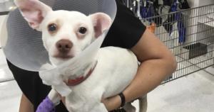 Abused Dog Leg Amputation