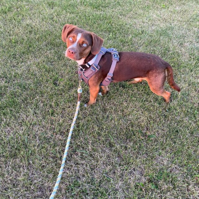 Aly Raisman lost dog