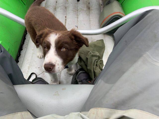 Buckley lost puppy