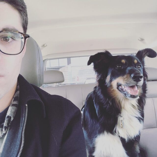 Dog and human in car