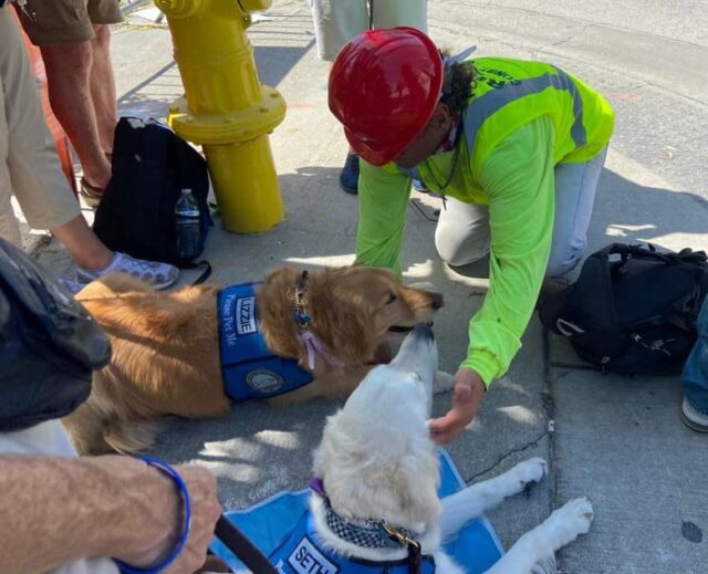 First Responder with Therapy Dogs