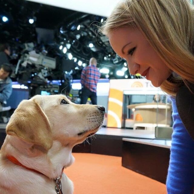 Puppy on Today Show set