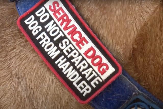 Service dog collar patch
