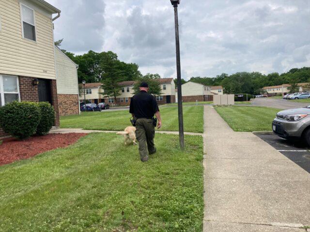 Shelter staff walking dog