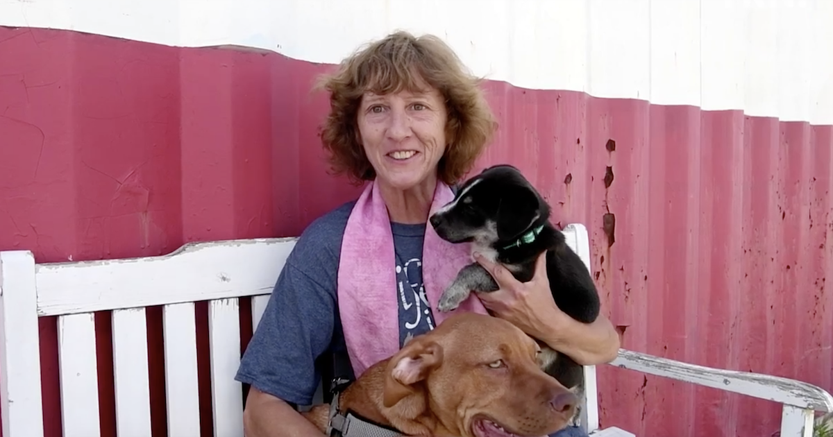 Volunteer fosters 300 dogs