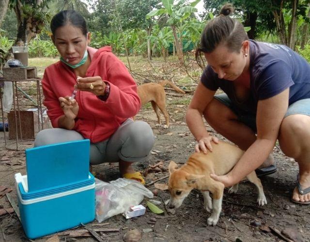 bodhi dog shelter