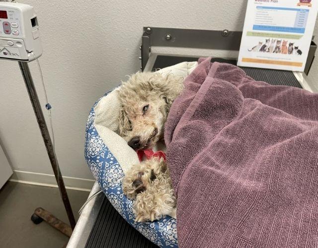 petal dog rescue